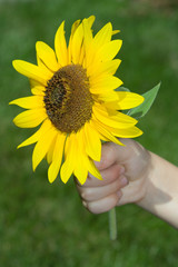A sunflower for you