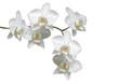 Weiße Orchideé