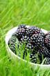 Organic blackberries in bowl