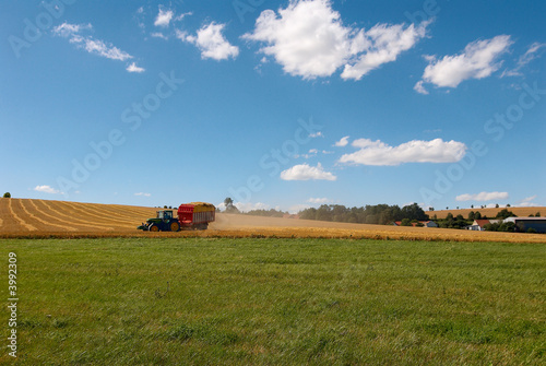 Harvesting. A tractor collecting wheat on a field.