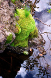 Green Moss at Quiet Pool poster