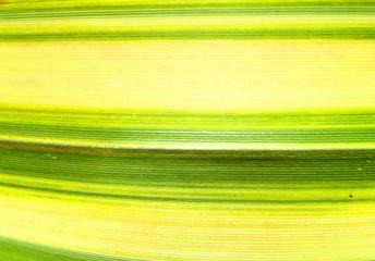 Green Line Leaf 4