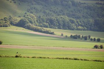 English countryside along road to Shaftesbury