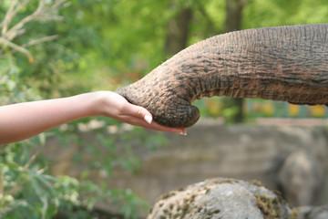Elefant und Hand
