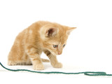 Yellow kitten investigating yarn poster