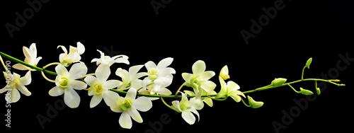 Fototapeten,blume,floral,orchidee,weiß