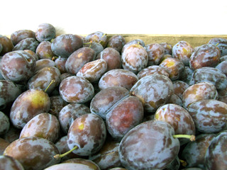 lots of damson plums