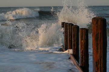 Wave Terminal