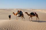 camel caravan in desert Sahara