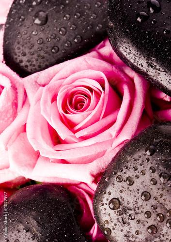 Zen roses © Sebastian Duda