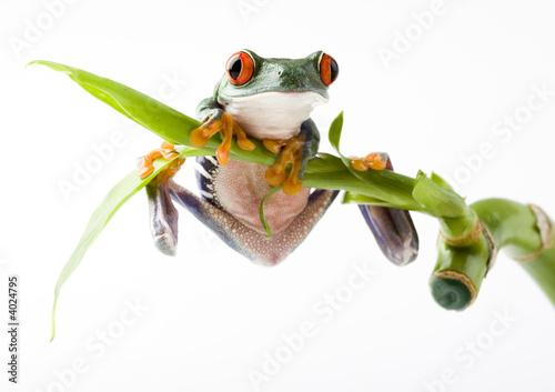 Foto op Plexiglas Kikker Frog on bamboo