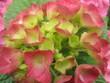red pink garten and flowers