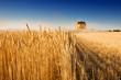Leinwandbild Motiv Harvest time