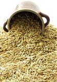 oat grains poster