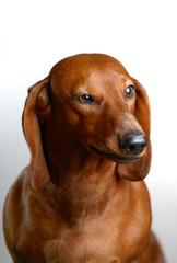 dog s7
