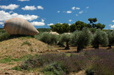 Rural landscape in Provence, southern France poster