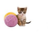 kitten and some ball of yarns poster