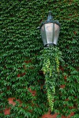 Lamp on the green fence