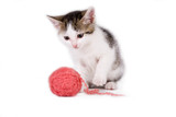 kitten playing with a ball of yarn poster