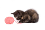 spotty kitten playing with a ball of yarn poster