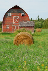 Hay and Barn at the farm