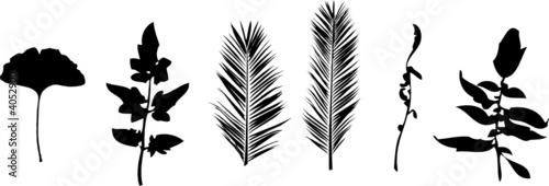 Blätter 1