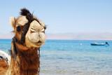 camello mirando a cámara