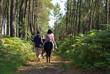 forêt de landes à cheval - 4059725