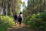 forêt de landes à cheval