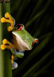 Fototapety Crazy frog