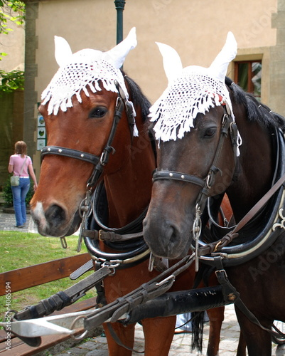 2 harnessed horses