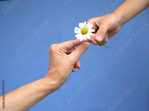 Gives a daisy away