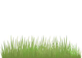Green grass of different shades