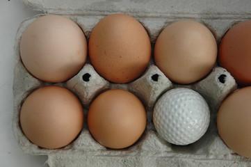 dolf eggs