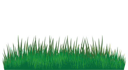 Green grass of different shades 3