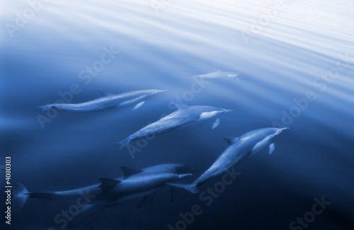 Tuinposter Dolfijn Swimming Dolphins