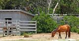 Wild ponies poster