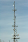 Cell Phone and Antenna Tower poster
