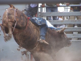 Action bull ring at the rodeo