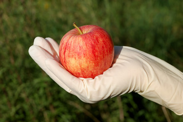 Hand with rubber glove holding contaminated apple