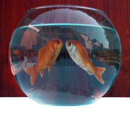 Couple kissing inside a goldfish bowl love