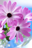 Pink daisies bouquet - 4102586
