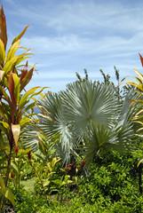 Hawaii Flora 05