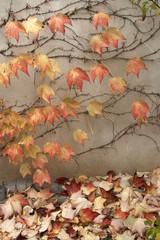 Herbstlaub 1