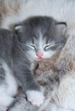 cute kitty sleeping poster