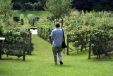 man walking in garden going towards a pond poster