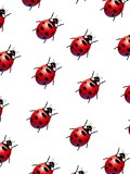 Ladybirds poster