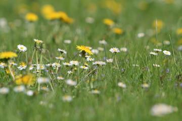 Idillyc meadow with flowers