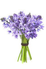 Bouquet of bluebells isolated