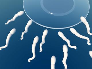 Sperm 14